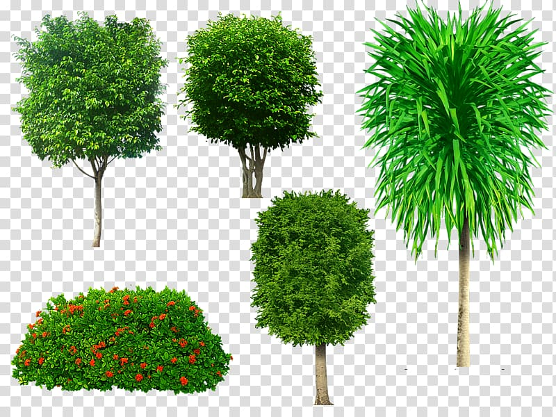Tree Portable Network Graphics Adobe shop Psd, tree.
