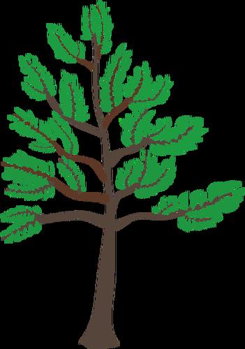 Young cedar tree illustration.