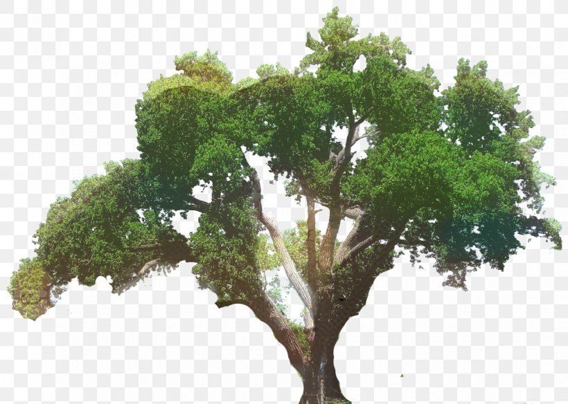 Clip Art Southern Live Oak Tree Transparency, PNG.