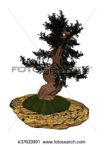 Clipart of Western juniper tree bonsai.