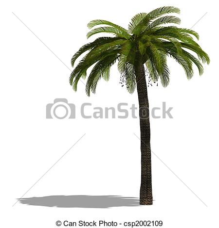 Stock Illustration of 3D Render of a palm tree with shadow and.