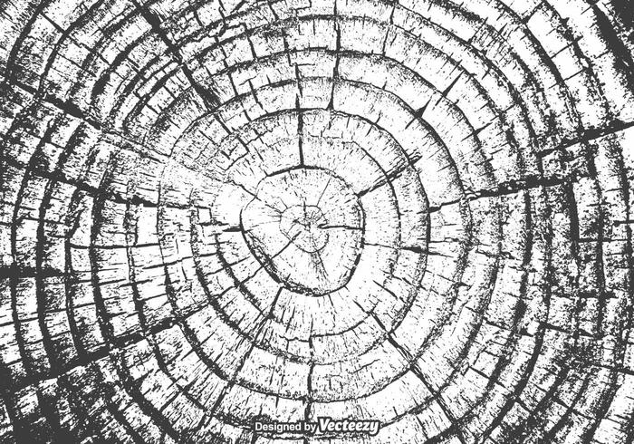 Free Tree Rings Vector Texture.
