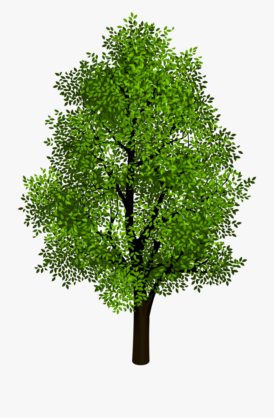 Tree Clipart Transparent Background.