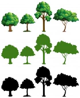 Tree Vectors, Photos and PSD files.