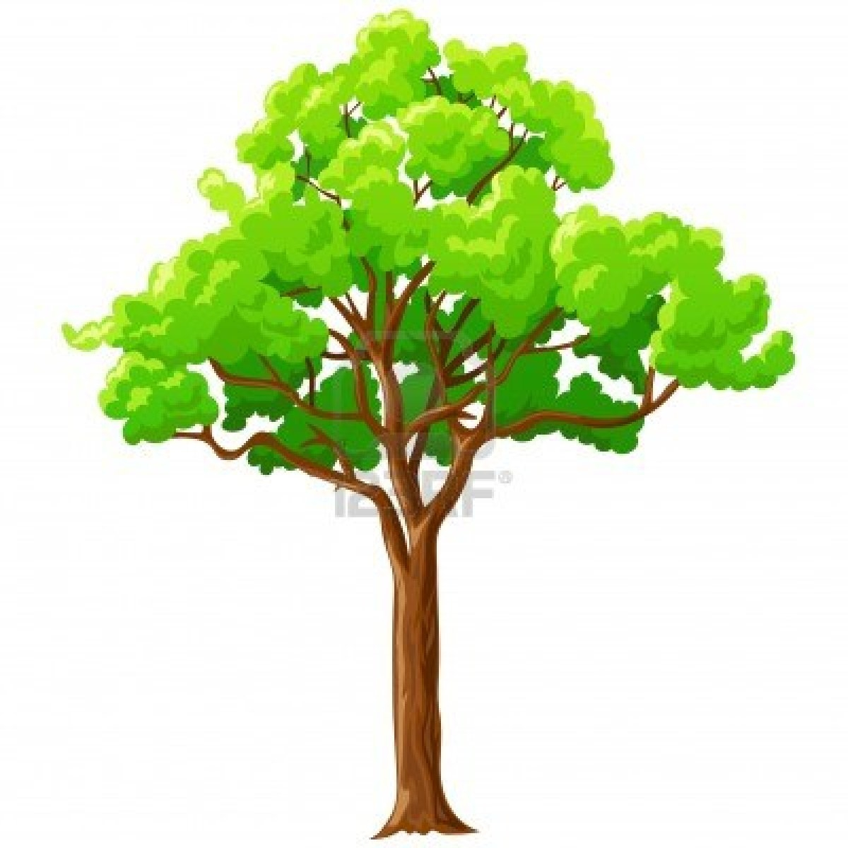 tree clipart wallpaper #8