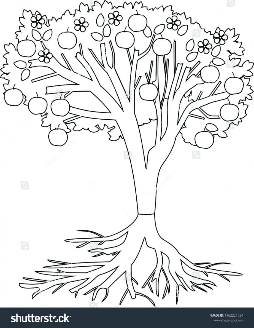 color pages ~ Tremendous Coloring Pages Tree Roots Image.