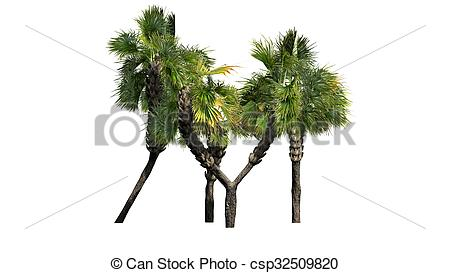 Clip Art of Palmetto palm tree cluster.