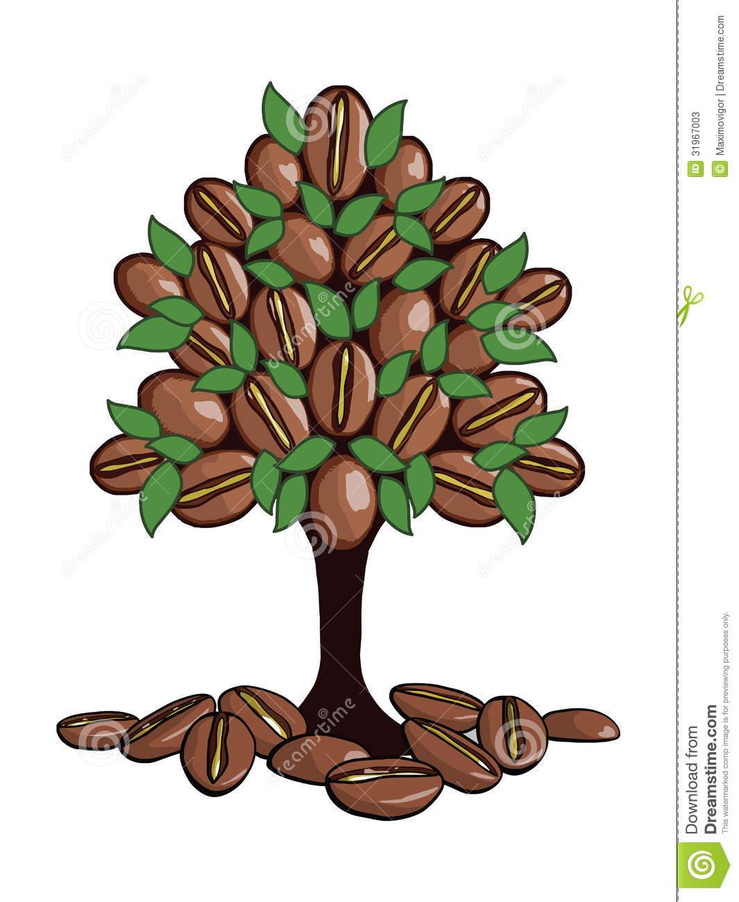 The Coffee Tree Stock Photos.