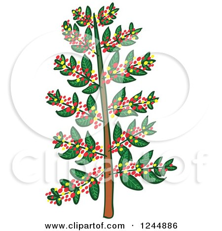 Clipart of a Coffee Tree.