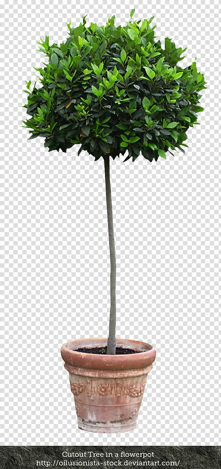 Cutout Tree in a flowerpot, green plant in vase transparent.