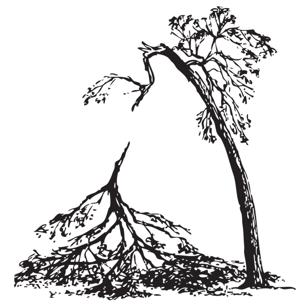 Storm damage tree clipart.