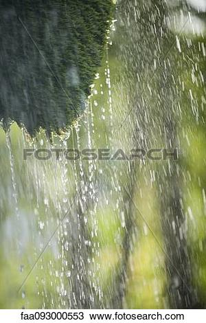 Stock Photo of Rain dripping off tree branch faa093000553.