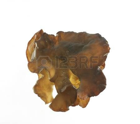 Tree Ear Stock Photos Images, Royalty Free Tree Ear Images And.