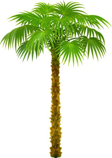 Big fern tree clipart.