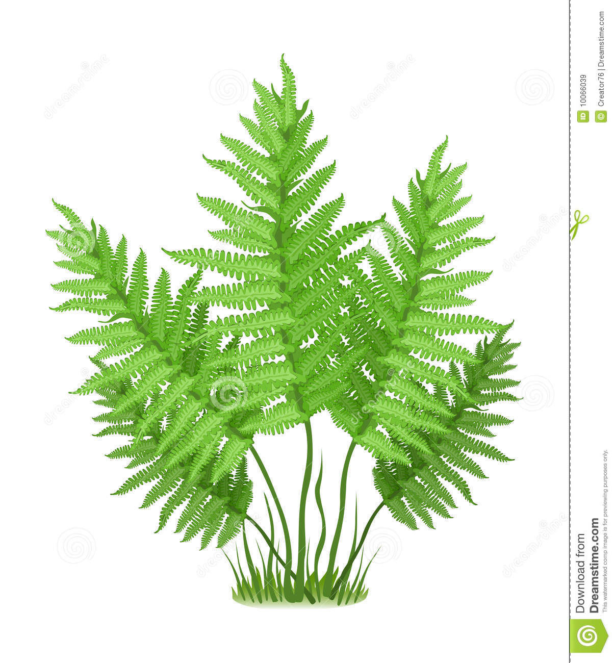Tree fern clipart #19