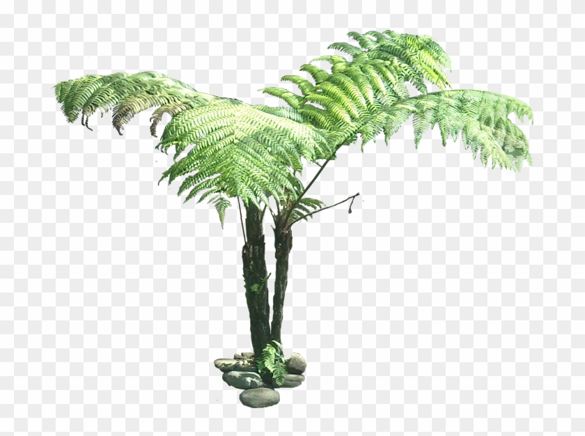 Fern Clipart Transparent Background.