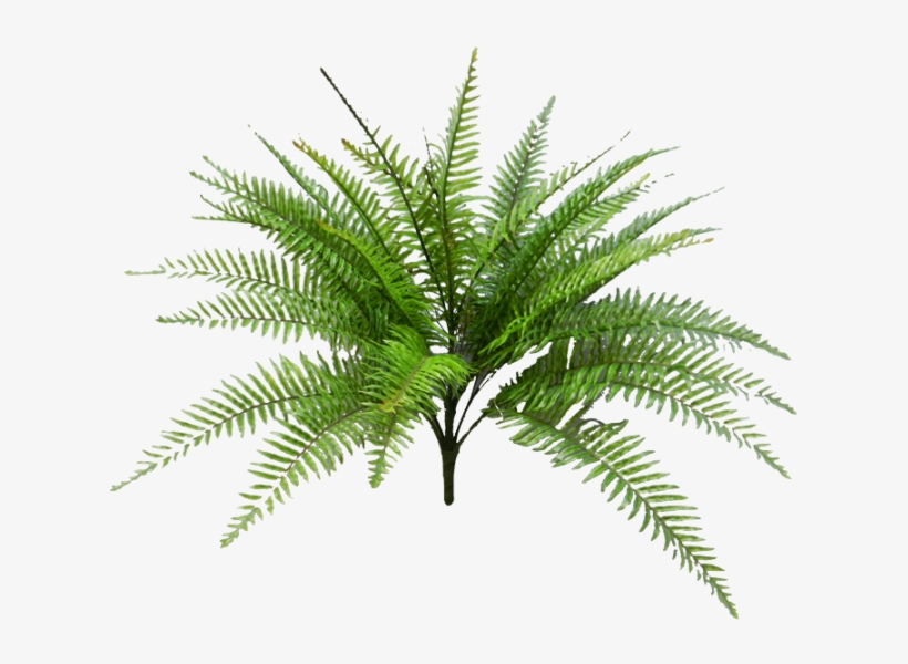 Tropical Fern Png Svg Black And White Download.