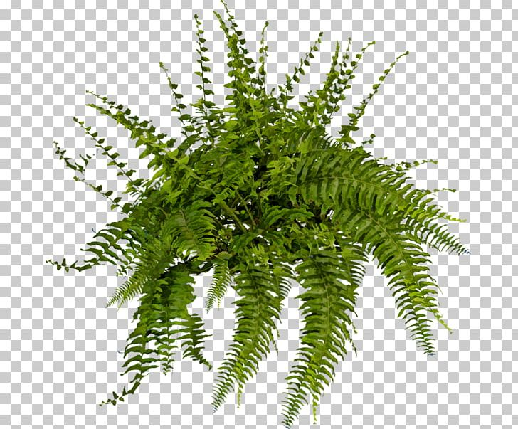 Plant Tree Fern Shrub PNG, Clipart, Artificial Flower, Brush.
