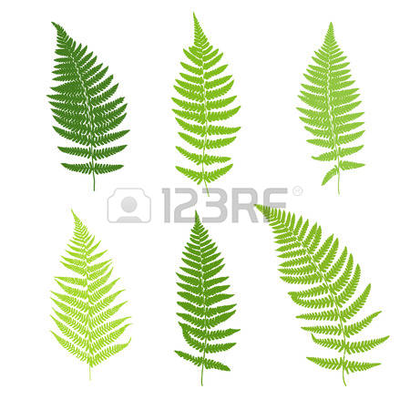 Tree ferns clipart #20