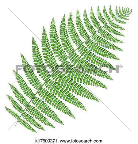 Clipart of tree fern k17600371.