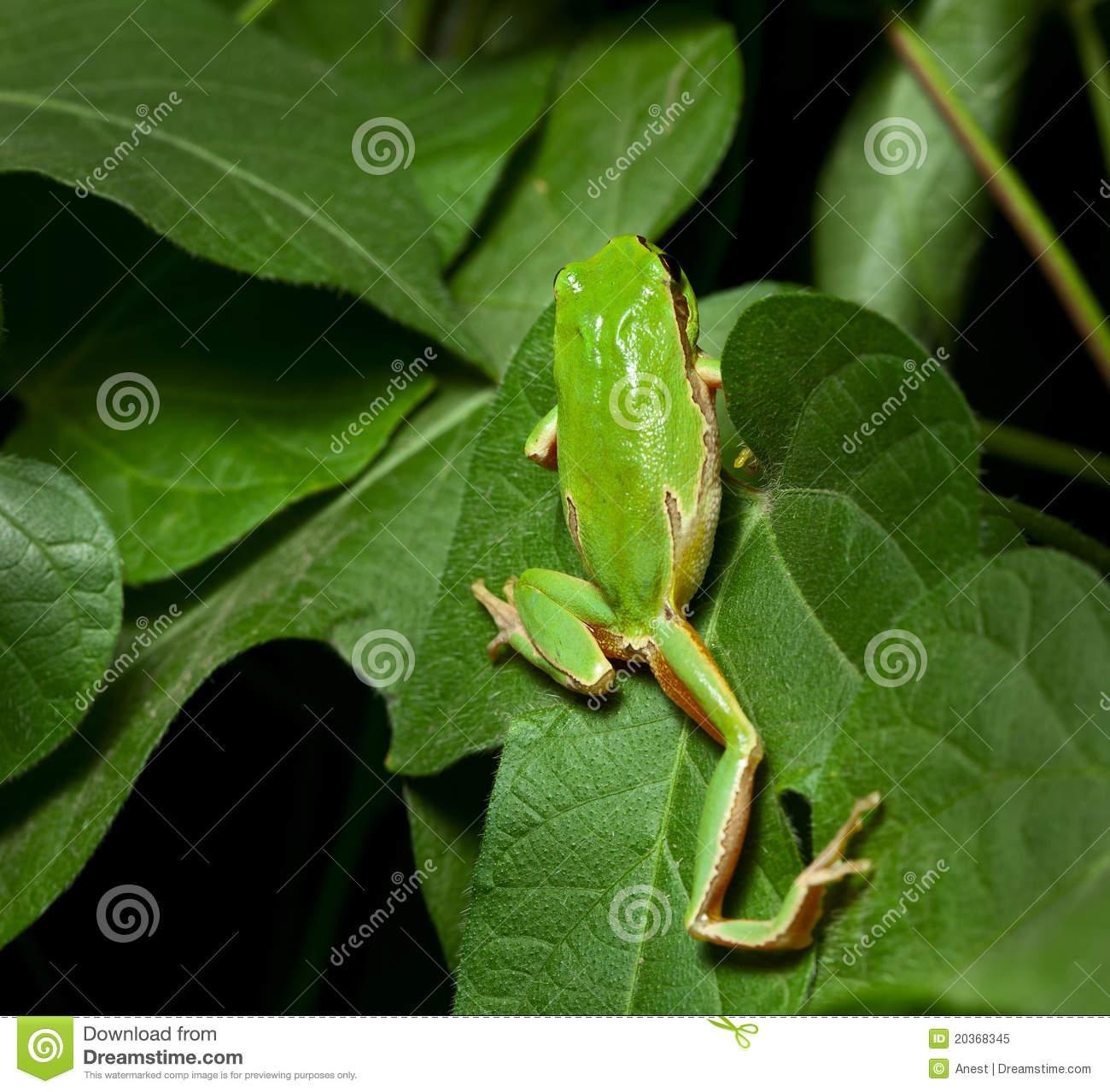 Tree Frog Climbing Tree Clipart.