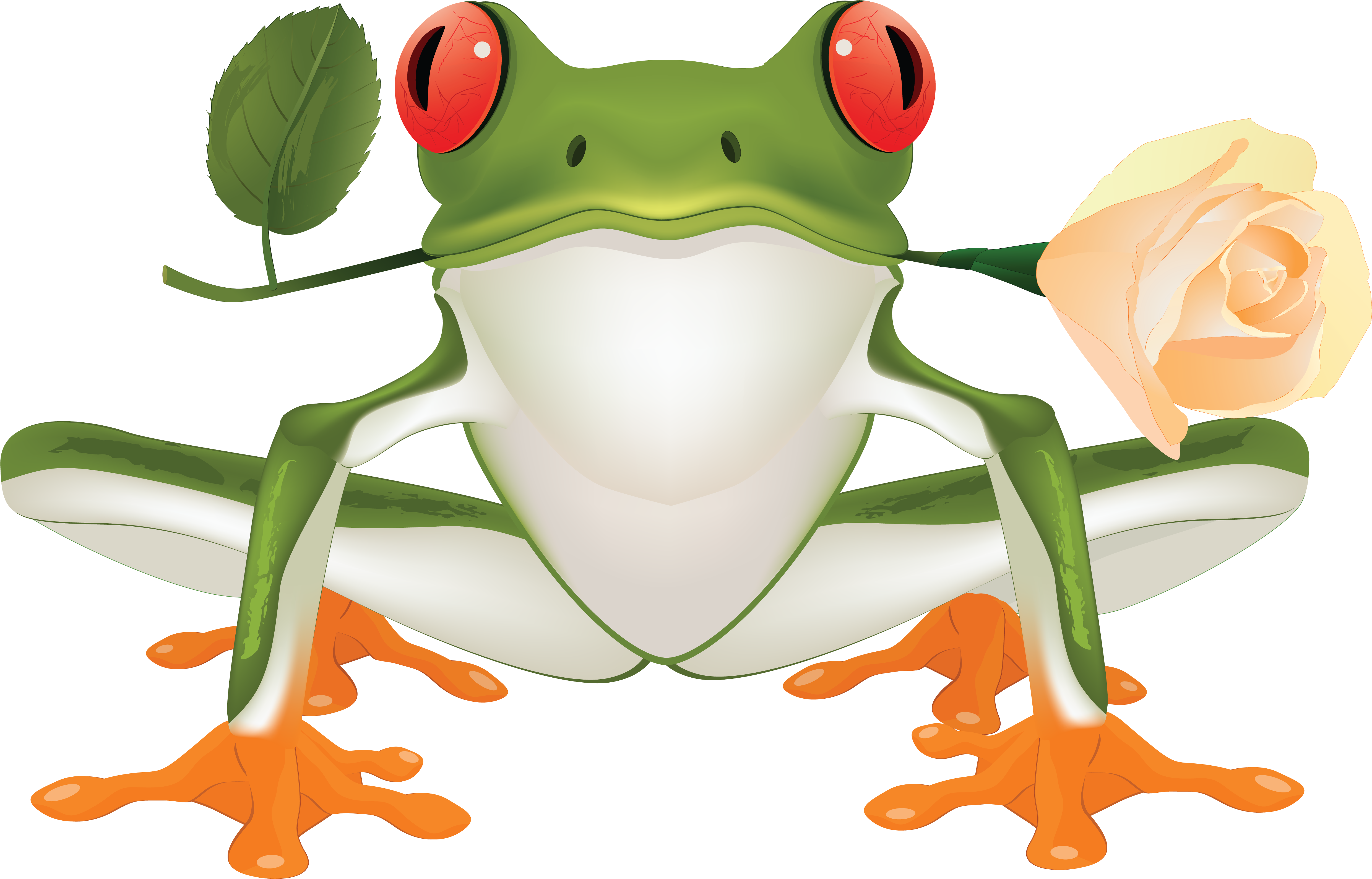 Amphibian,Frog,Agalychnis,Tree frog,Tree frog,Clip art,True.
