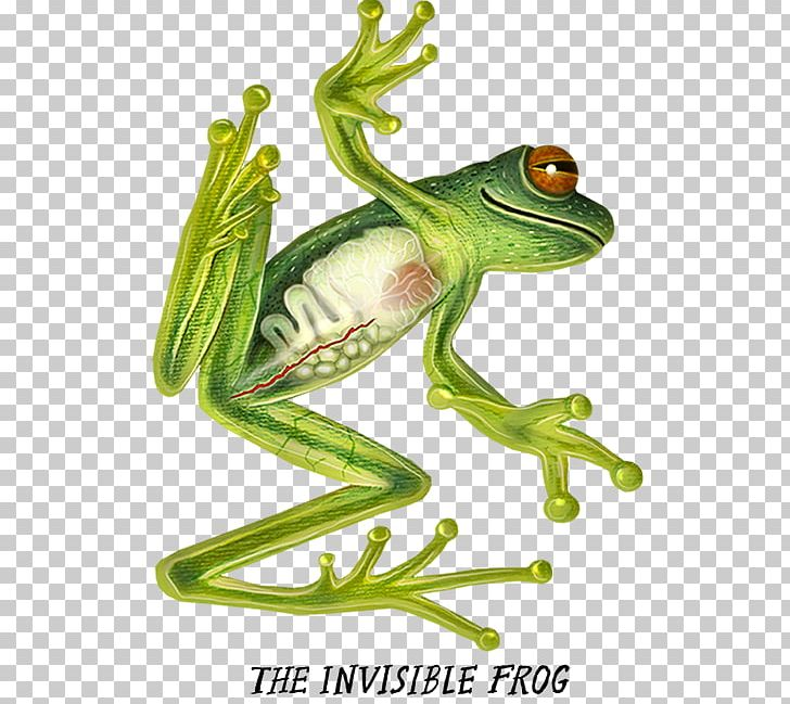 True Frog Tree Frog Flying Frog Toad PNG, Clipart, African.