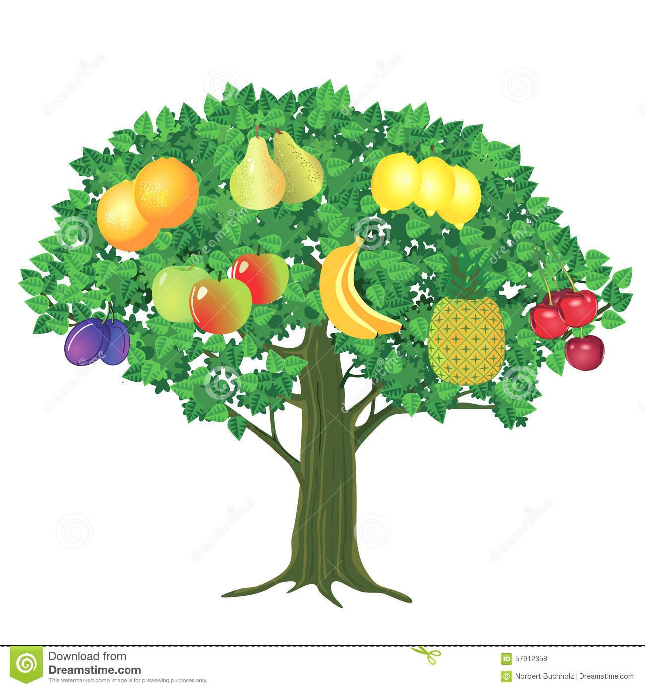 Fruit Tree Stock Vector.