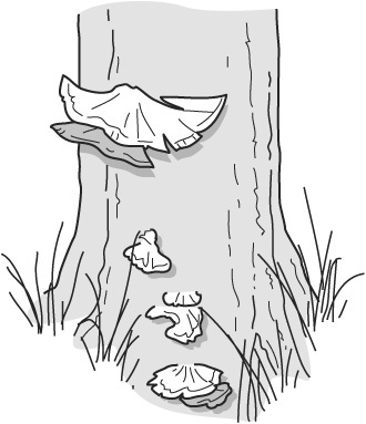 Clipart tree mushroom black and white.