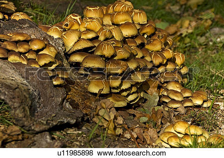 Pictures of England, North Yorkshire, , Fungi growing on an old.
