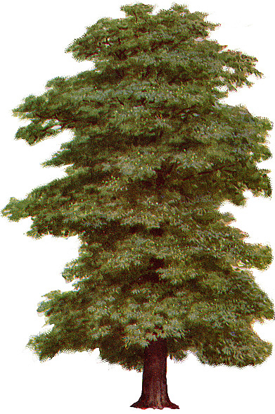 1000+ images about ARBRES on Pinterest.