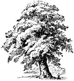 tree clip art free.