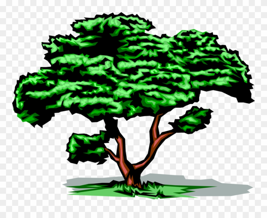 Vector Illustration Of Mature Deciduous Tree With Green.
