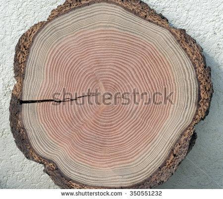 "tree Grate"" Stock Photos, Royalty."
