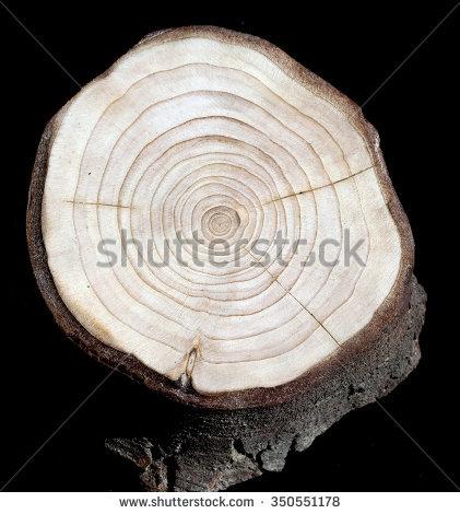 Tree Grate Stock Photos, Royalty.