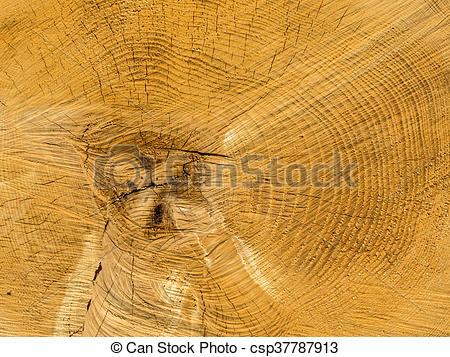 Stock Photography of felled tree. annual rings on tree grate.