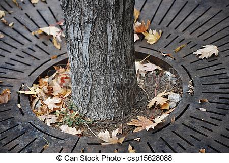Pictures of Metal tree grate to allow water to get to its roots.