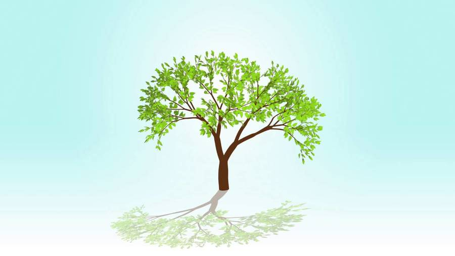Download animated tree growing from seed clipart Animation.