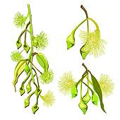 Gum tree Clip Art EPS Images. 174 gum tree clipart vector.