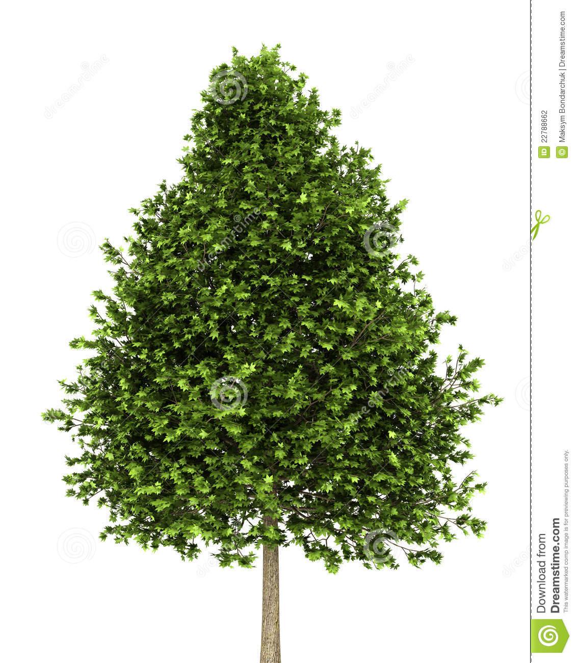 Gum ball tree clipart.