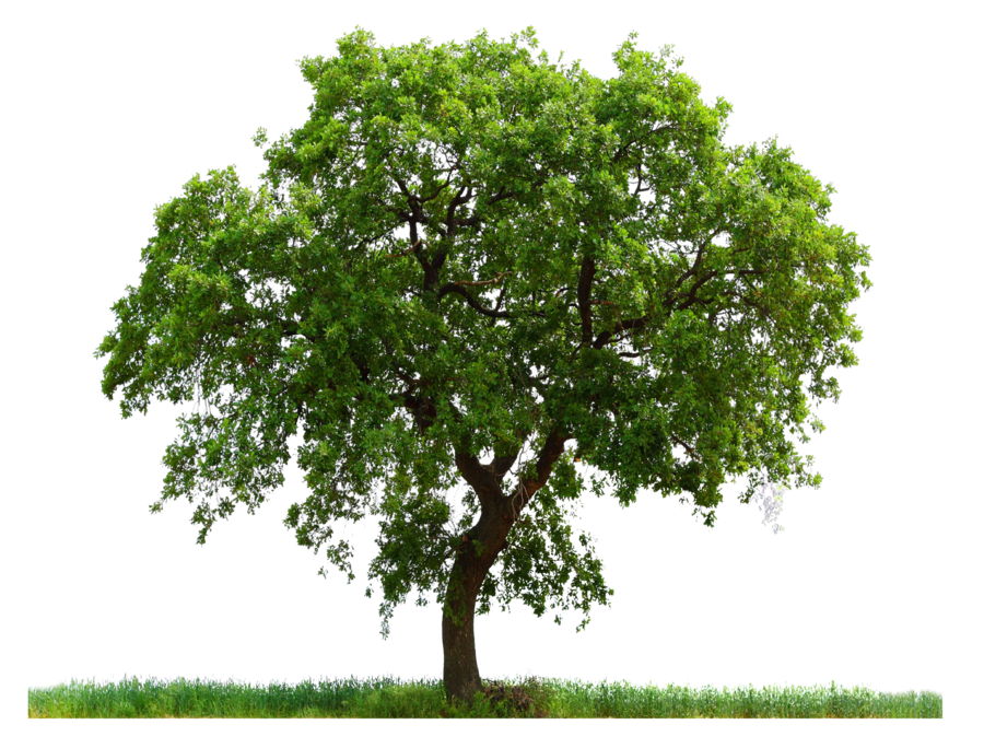 High Resolution Tree Png Icon #733.