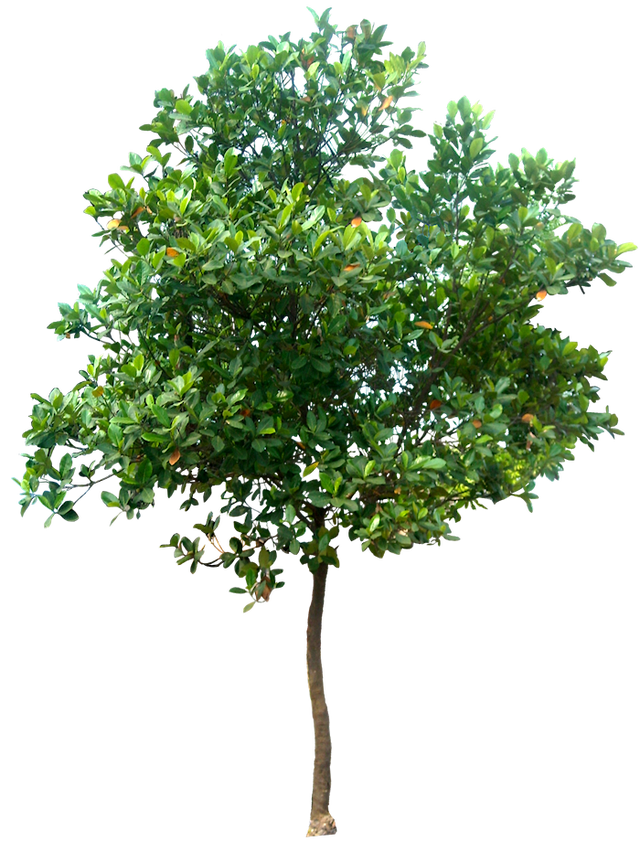 Tree Png High Resolution & Free Tree High Resolution.png.