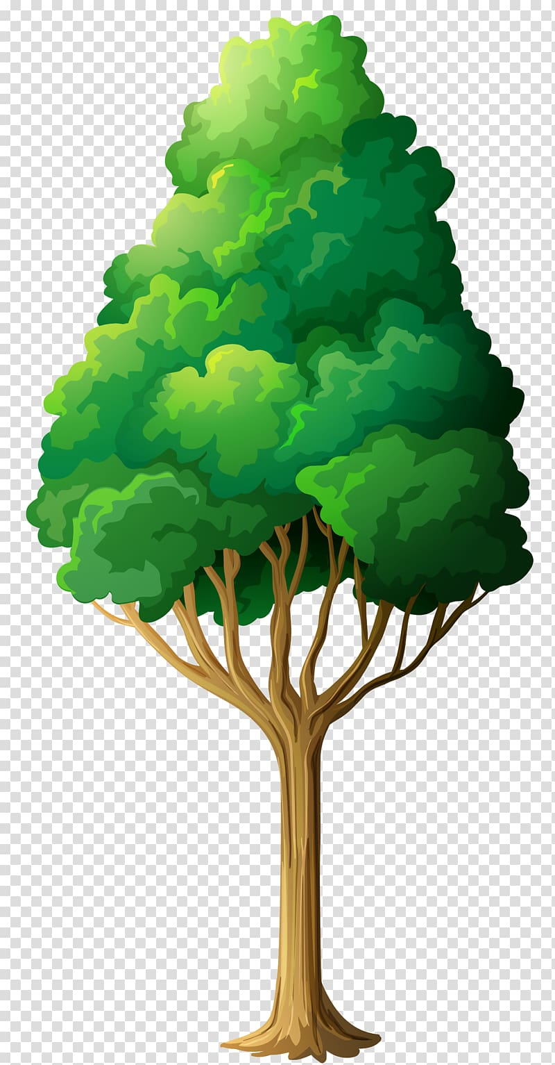 Green Tree , green leafed tree illustration transparent.