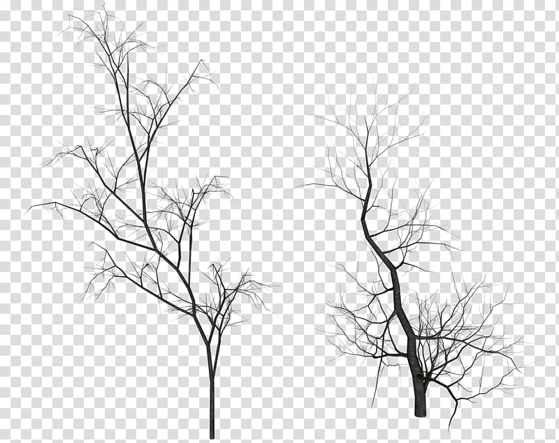 Dead Trees, two bare trees illustrations transparent.