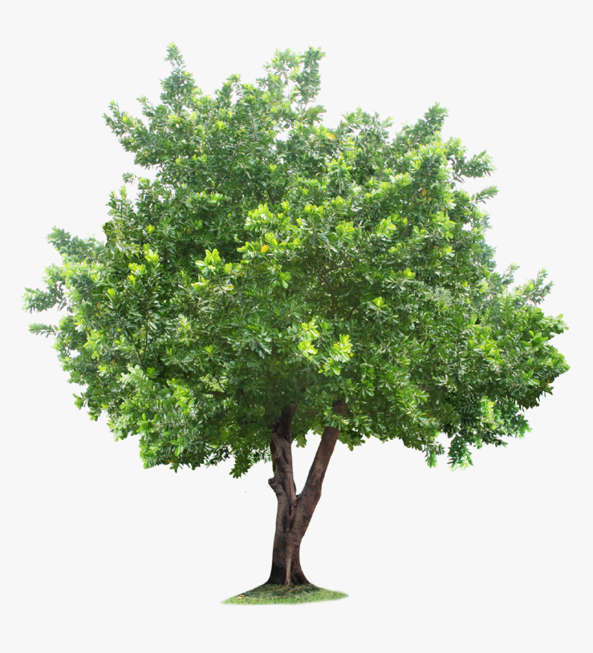Root Tree Free Frame Clipart.