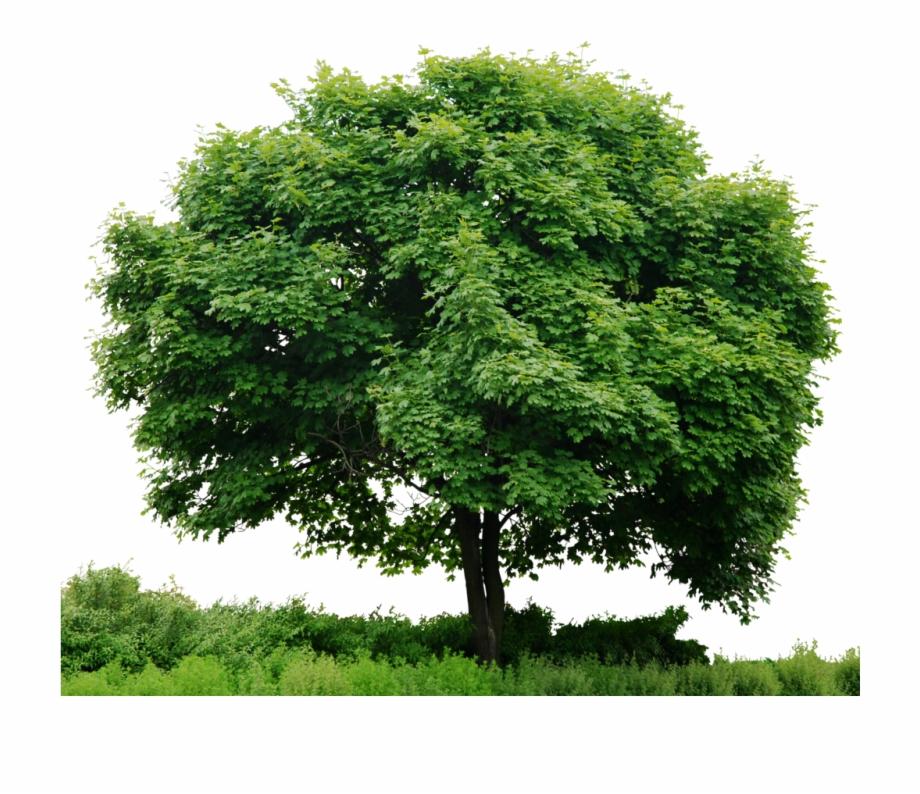 Com Hd Tree Full Render By 3fixr.