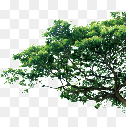 Tree HD PNG Transparent Tree HD.PNG Images..