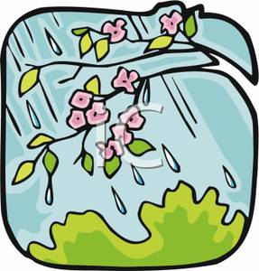Blossoms on a Tree In a Rain Storm Clipart Image.