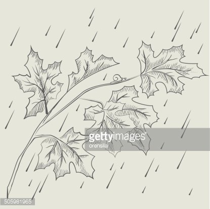 Maple tree branch in the rain Clipart Image.