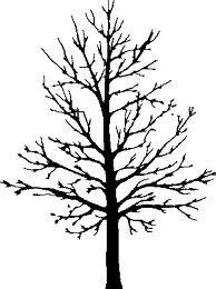deciduous tree in winter.